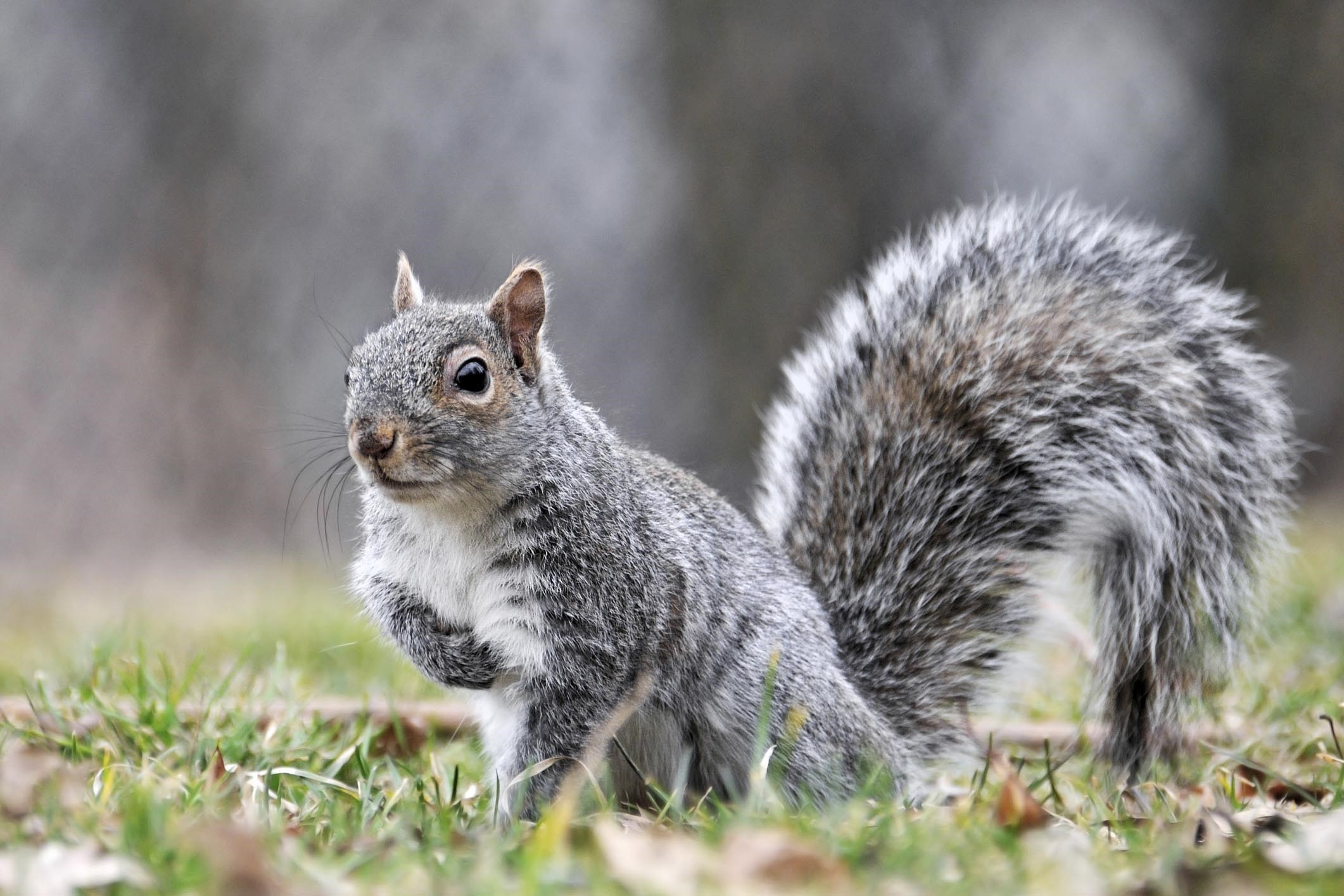 Dorset Wildlife Trust Warns People Not To Feed Squirrels After Man Bitten Bournemouth Echo
