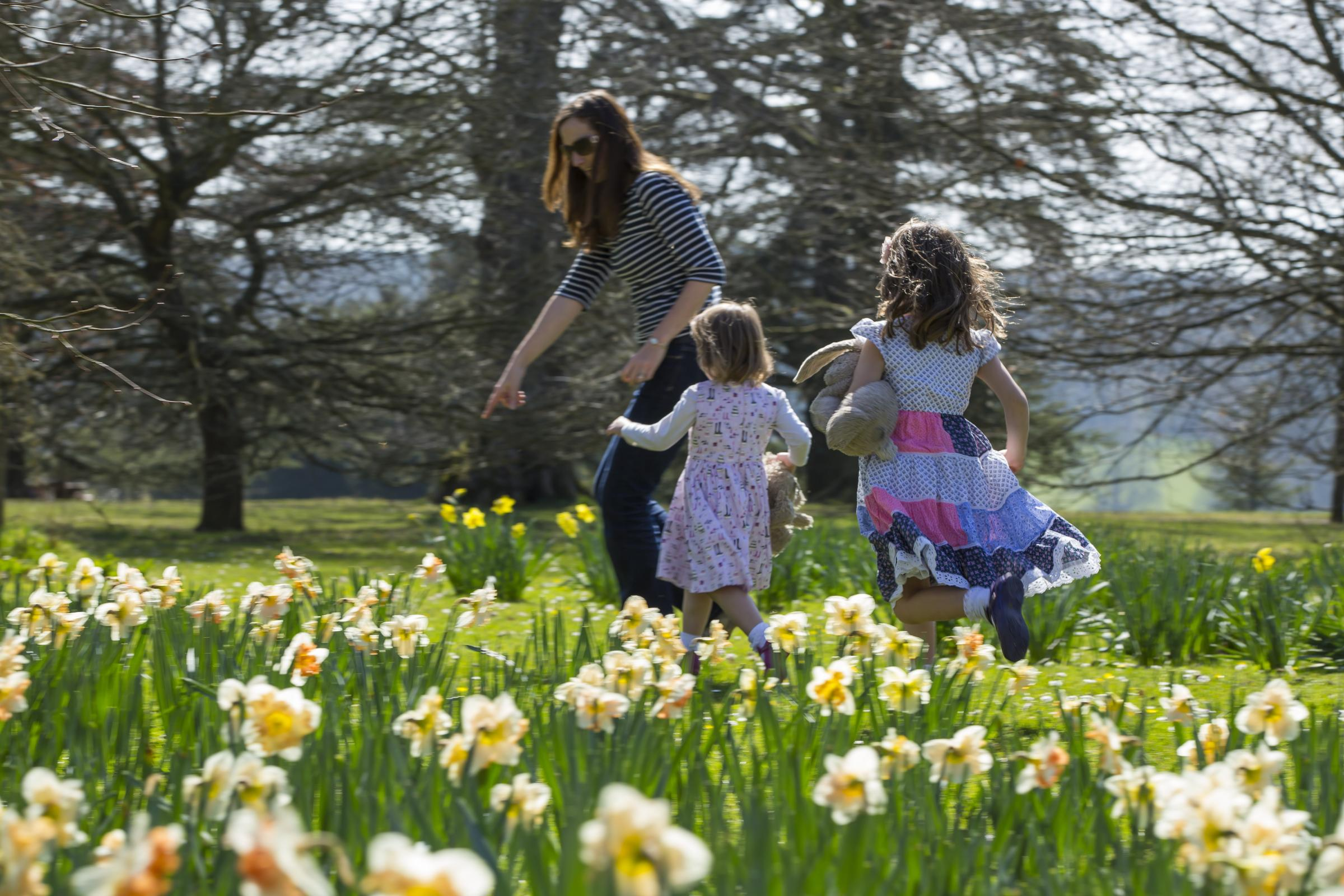 10 things to do in dorset and the new forest over easter 10 things to do in dorset and the new forest over easter bournemouth echo negle Image collections