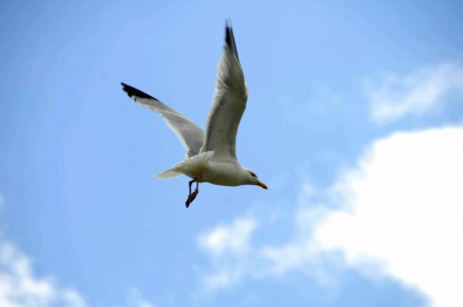 Stop feeding the seagulls, public told, after hungry birds