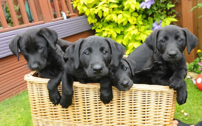 Tough new laws to ban sale of puppies under eight-weeks-old