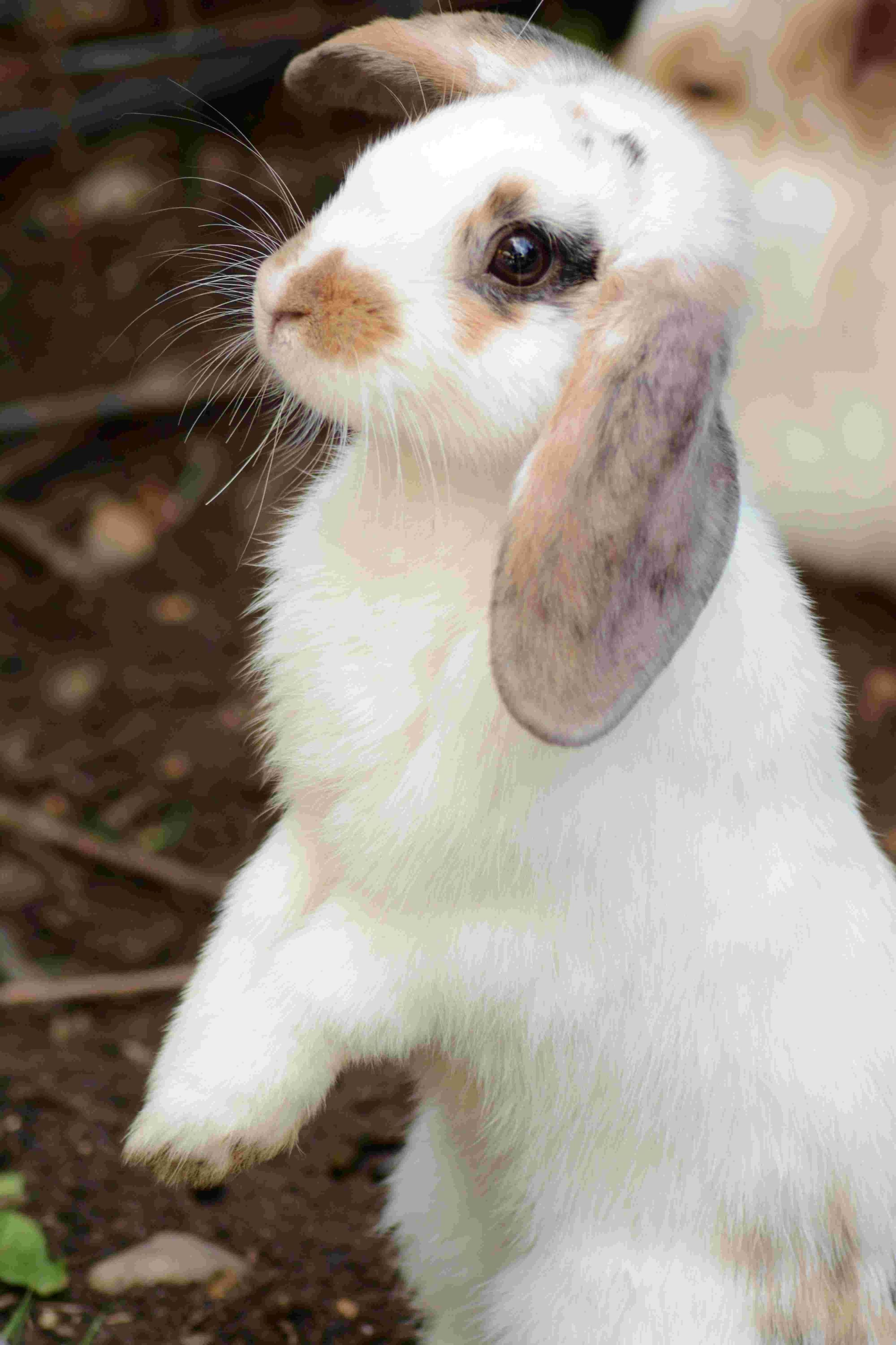 This Is Why Pets At Home Won T Sell You A Rabbit Over Easter Bournemouth Echo