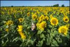 BLOOMING: A pick-your-own sunflower farm near Christchurch is expecting a rush of secateur-wielding customers