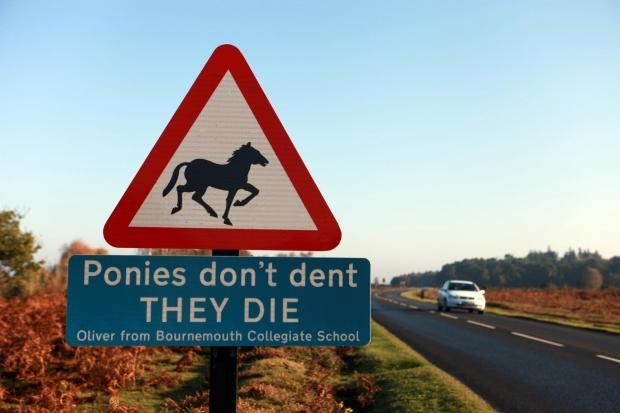 Sign warning people about animals killed in the New Forest.