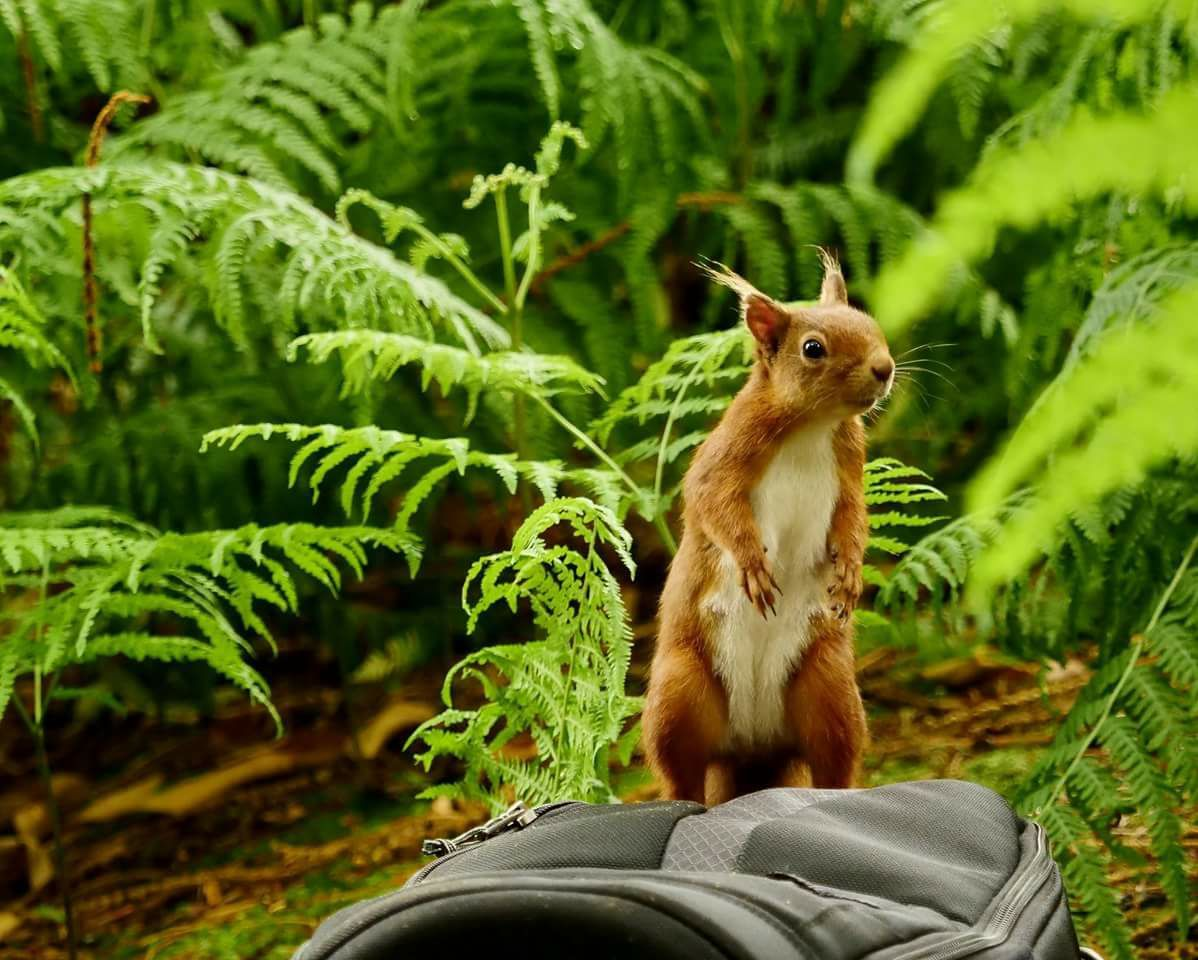 Picture of the Day: A cheeky red squirrel on Brownsea Island
