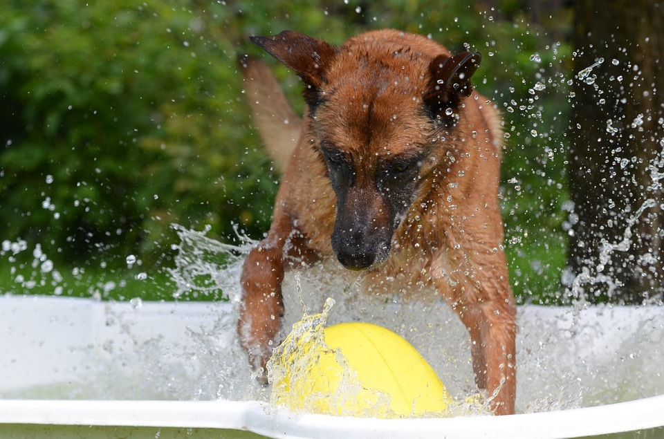 A dog splashing around in the water. Picture via Pixabay