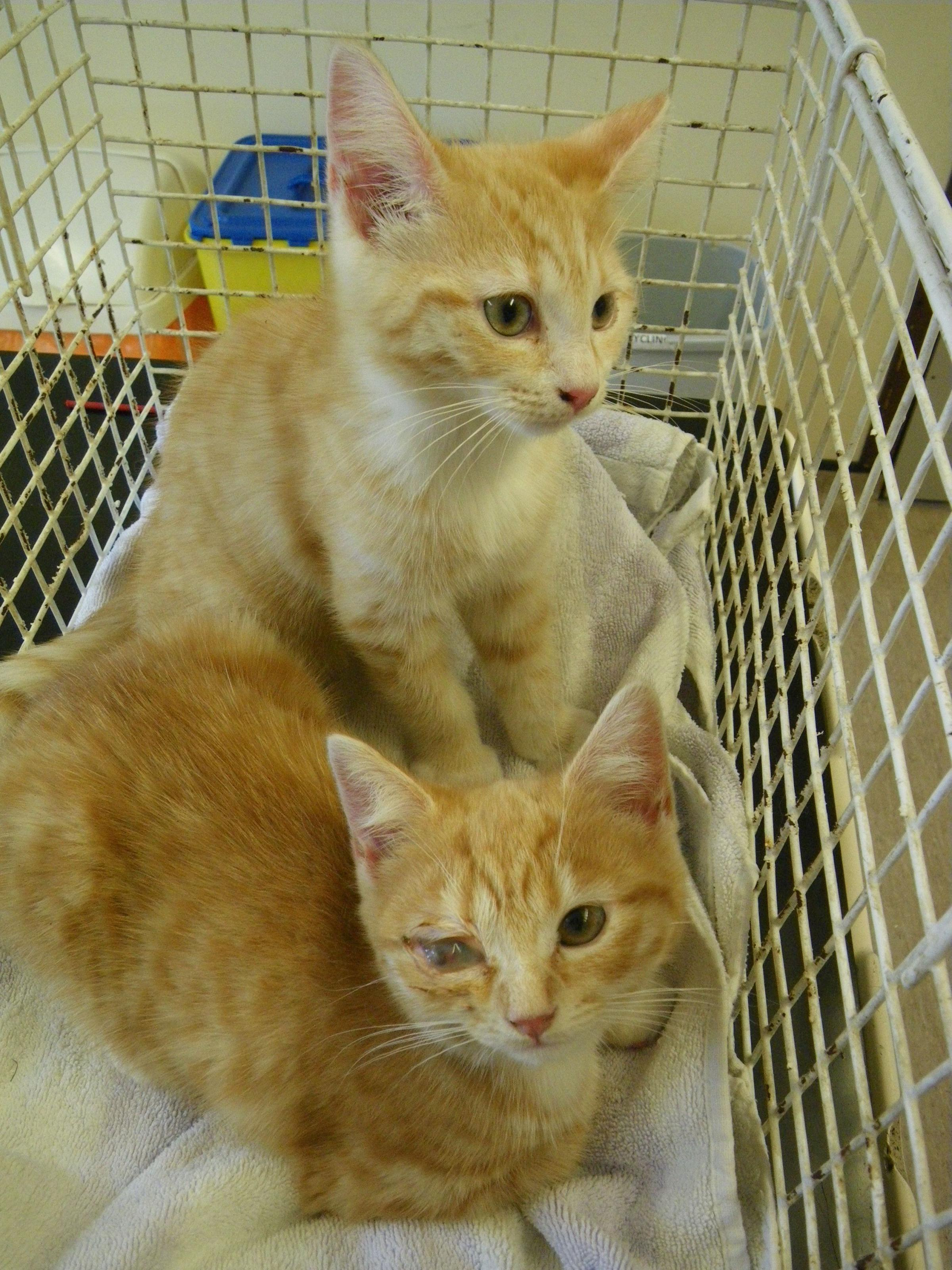 Two kittens dumped in woodland in New Milton, Hampshire in June. Picture: RSPCA