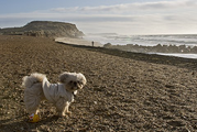 Bournemouth Echo: Max at Hengistbury Head, on Flickr