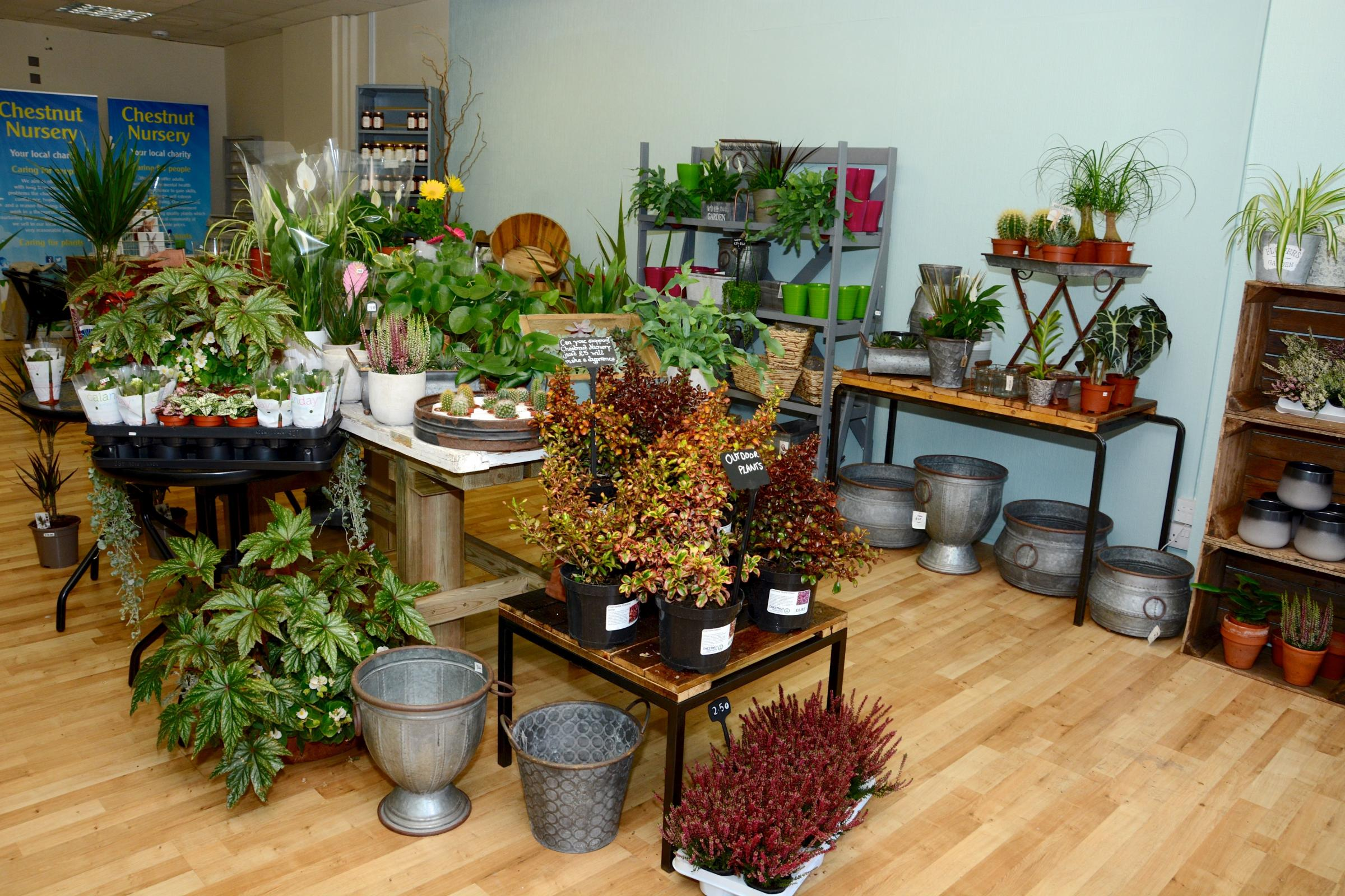 Chestnut Nursery opens pop-up shop at the Dolphin Shopping Centre. Picture: SKC Photography