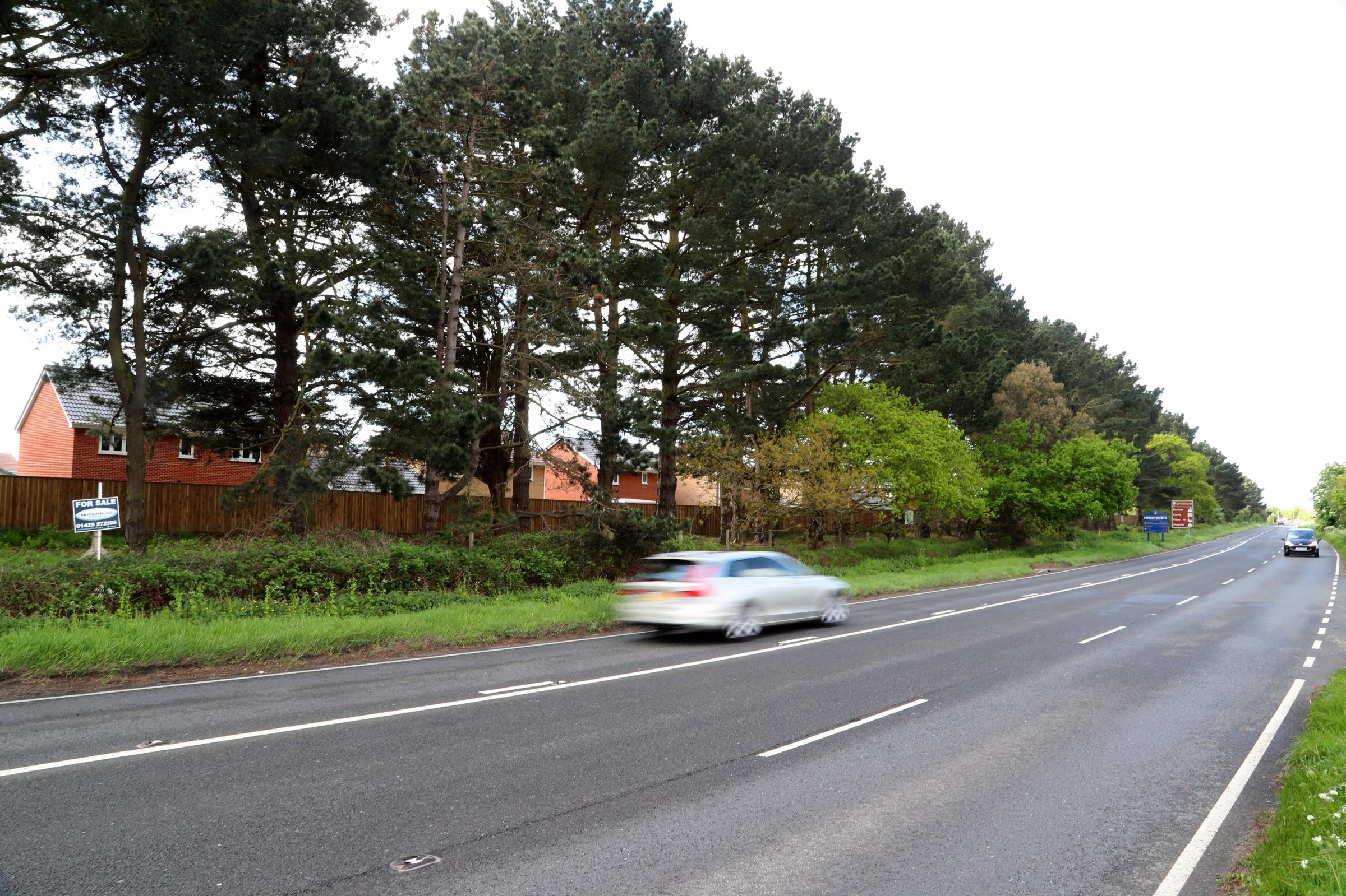 DIVIDE: The row of trees splitting opinion between Hoburne Development and Christchurch council