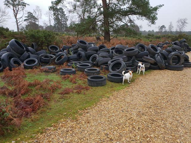 EYESORE: Tyres have been dumped at Holton Lee. Image by Mike Marks