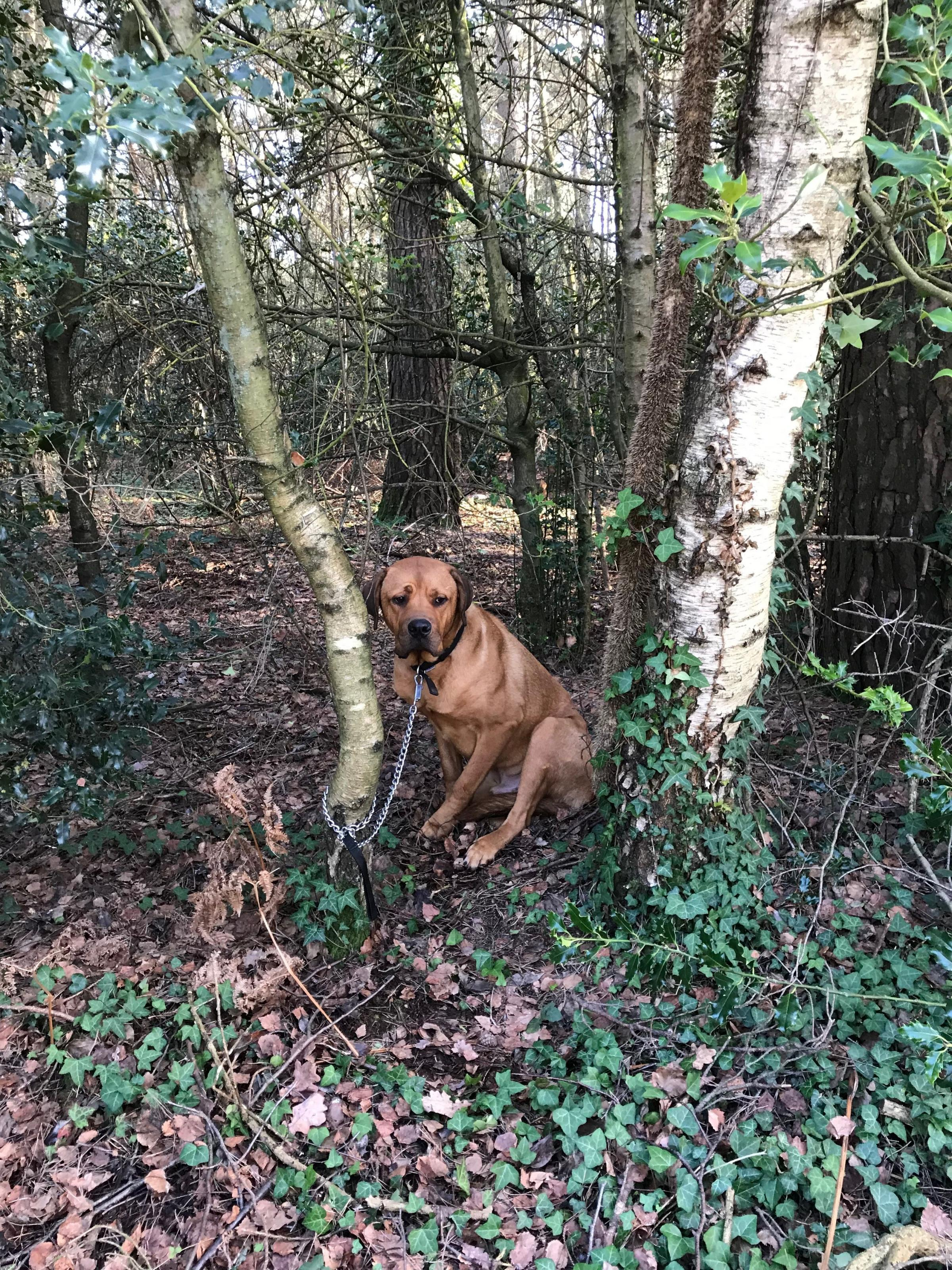 Bruce was found tied to a tree near RSPCA Ashley Heath Animal Centre