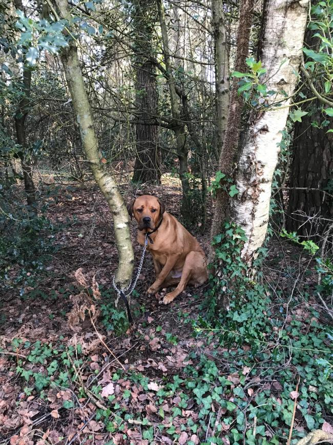 Dog was found tied to a tree near RSPCA Ashley Heath Animal