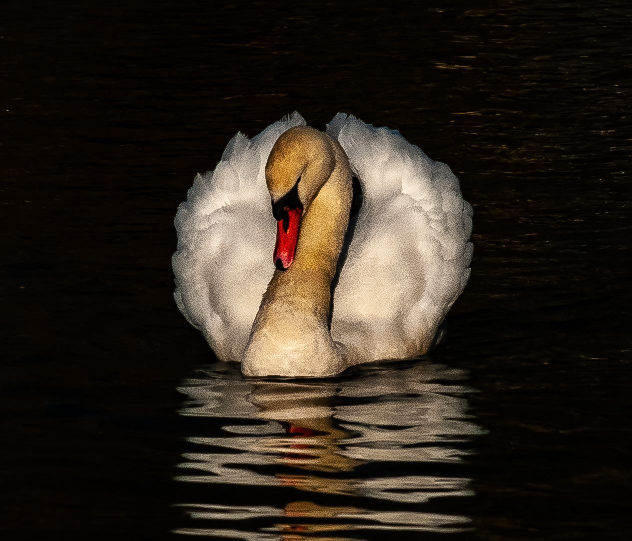 Swanning around, by Daily Echo Camera Club member Anthony James.