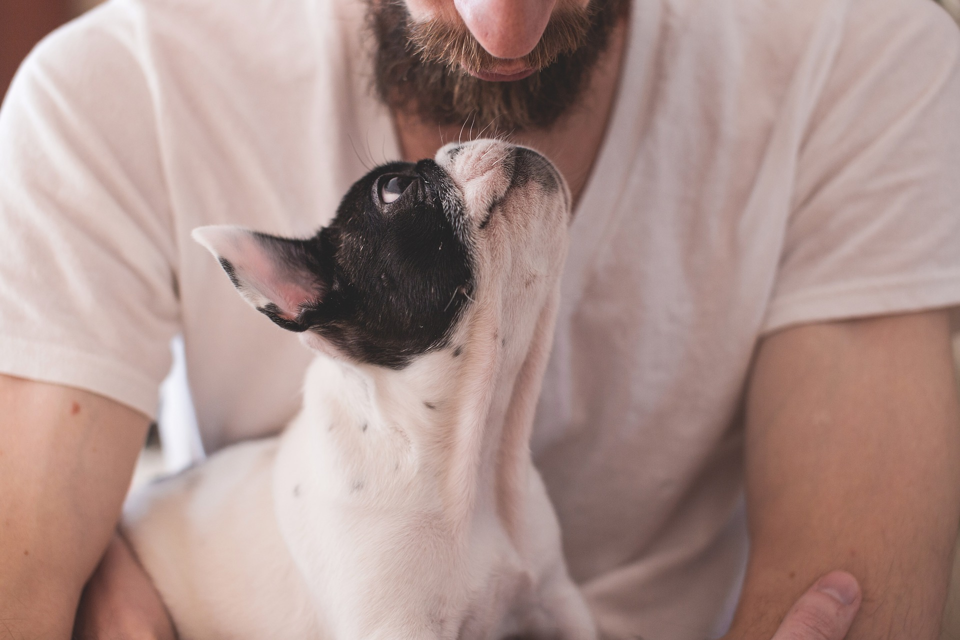 A pet can make you happier than a partner, according to a survey by pet charity Blue Cross