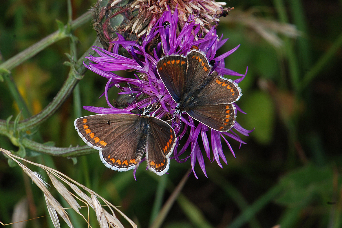 Foundation Friday; Guided Butterfly Walk with Keith Powrie