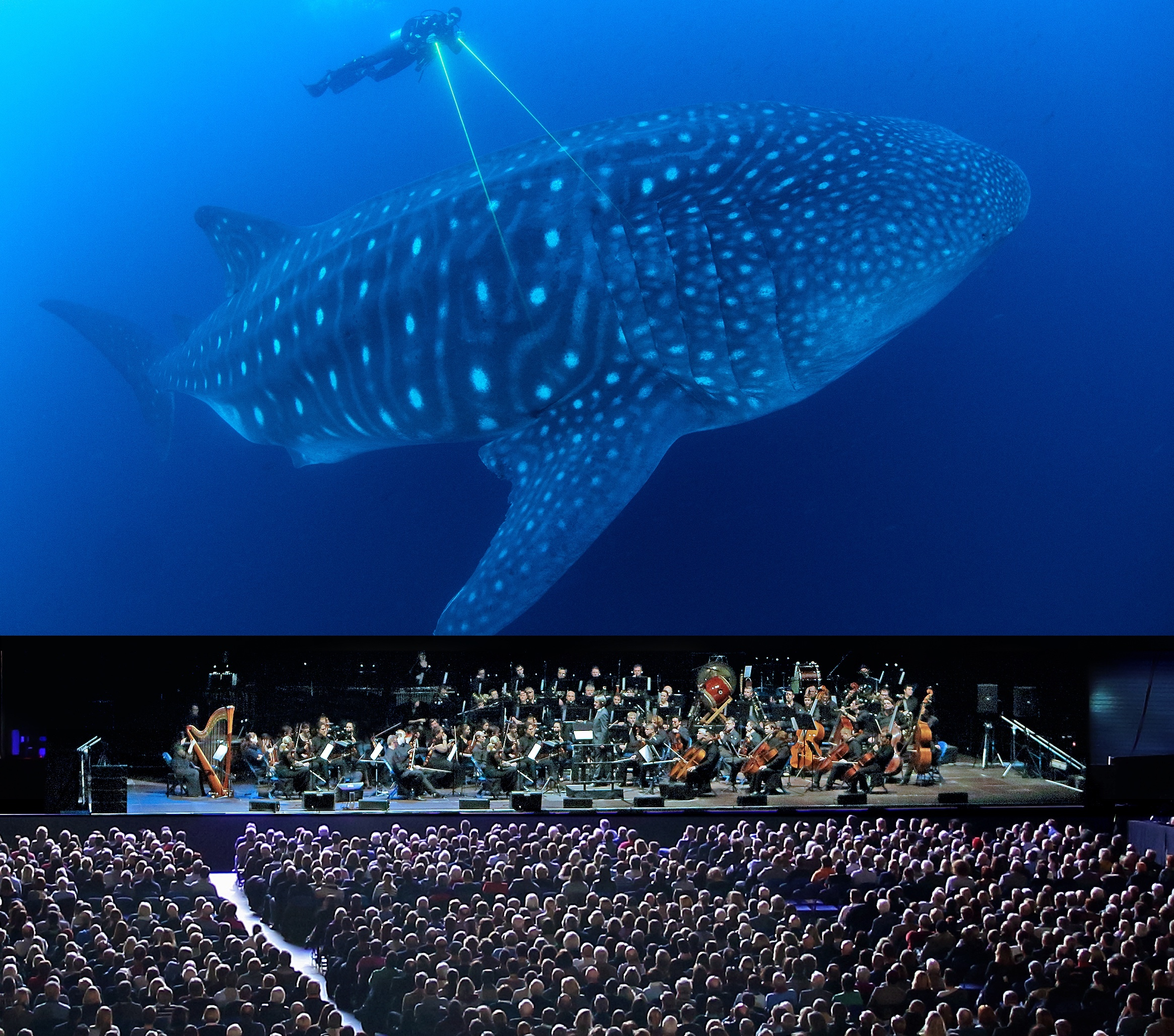 REVIEW: Blue Planet 11 Live in Concert - BIC
