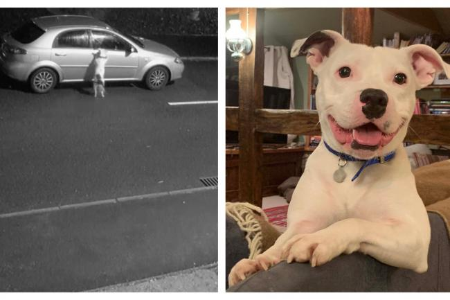 Dumped Staffie whose plight went viral gets new home