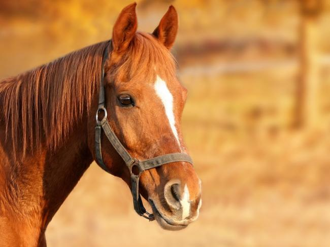Equine Viral Arteritis has been confirmed in Dorset. Picture via Pixabay