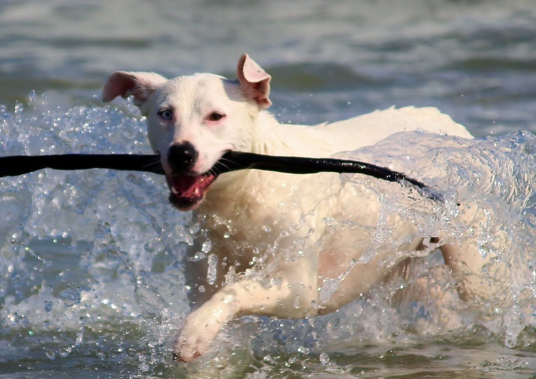 One of the best beaches in the UK to walk your dog is right on your doorstep