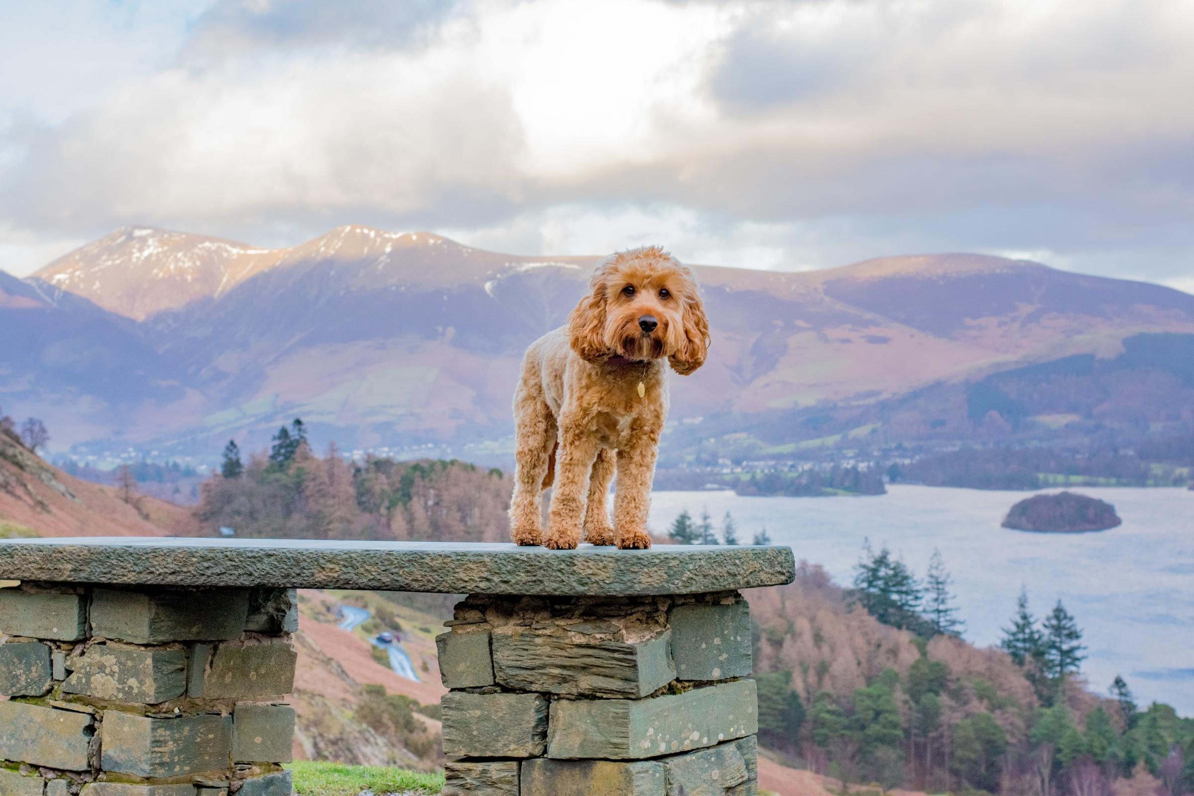 Canine Critics wanted: How you and your dog could get FREE holidays and days out