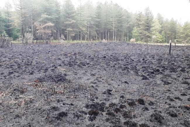 The aftermath of a fire at Ringwood Forest on Sunday, which killed a number of wildlife species