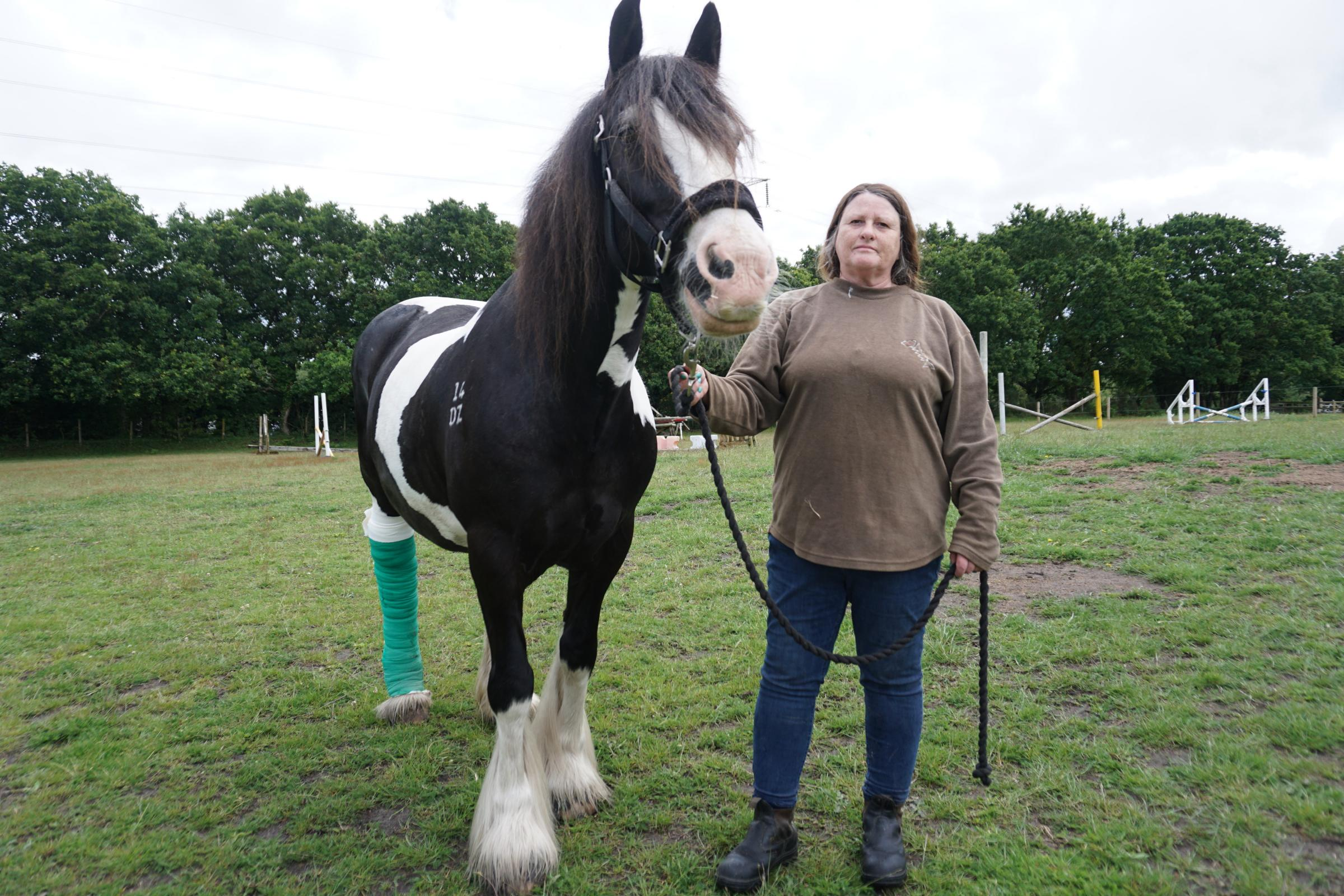 Horse rider wants to track down owner of 'dangerous' dog which attacked mare in West Moors